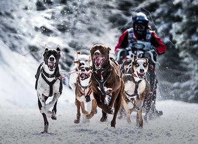 Great Race